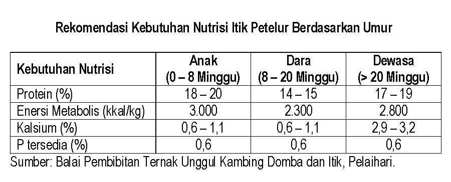 Rekomendasi kebutuhan nutrisi itik petelur berdasarkan umur