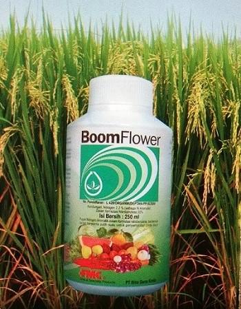 Boom Flower.