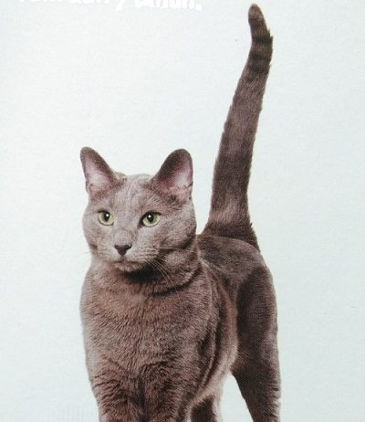 Fungsi vital kucing senior.