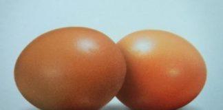 Telur ayam ras