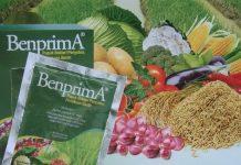 Memproduksi hormon-hormon tanaman, terutama Auksin (IAA).