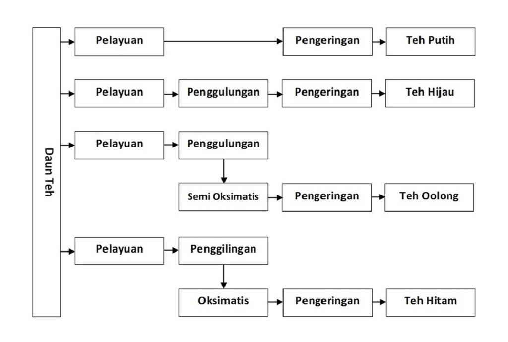 Pengolahan teh tanpa oksidasi enzimatis dan dengan oksidasi enzimatis.
