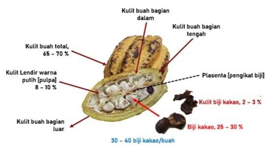 Anatomi buah kakao yang terdiri atas kulit, plasenta, dan biji kakao.
