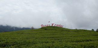 Dari pemetikan produksi teh, dapat diolah menjadi teh putih, teh hijau, teh oolong, dan teh hitam.