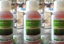 Herbisida Loyant™ 25 EC berbahan aktif Rinskor™ Active.