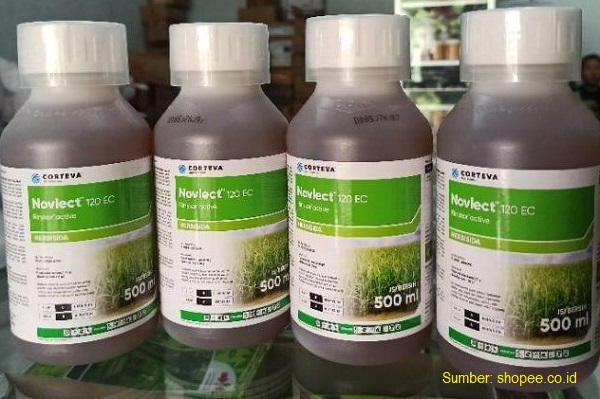 Herbisida Novlect™ 120 EC merupakan racun yang ampuh mematikan gulma padi tabela (tabur benih langsung).