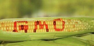 Menurut Graham Brookes dari PG Economic Ltd., Inggris, manfaat tambahan penghasilan petani 3 – 4 kali dari setiap tambahan investasi dengan menanam benih transgenik.