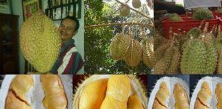 Daging buah durian Bhinneka Bawor tebal, berwarna oranye, bijinya kecil , dan kulit buanya tipis.
