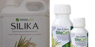 Pupuk silika bermanfaat mempertebal dinding sel pada batang dan bulir padi sehingga tanaman padi tahan hama dan penyakit.
