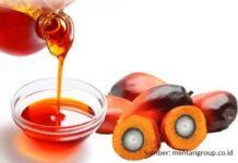 Mengonsumsi minyak sawit dapat menurunkan kadar kolesterol jahat LDL dan trigliserida darah serta meningkatkan kadar kolesterol baik HDL darah.