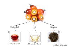 Kandungan vitamin A dan vitamin E minyak sawit dapat berperan sebagai antioksidan untuk mengatasi radikal bebas, penyebab kanker.