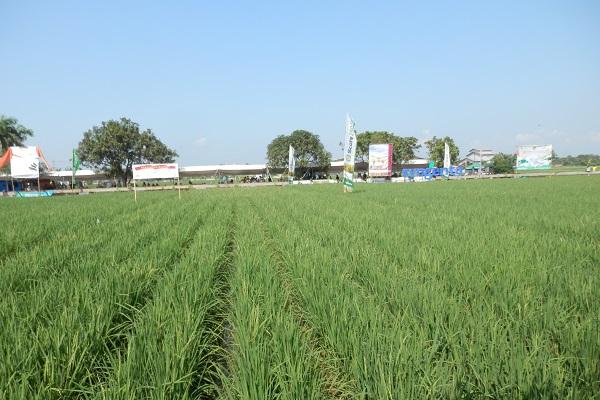 Unsur hara esensial dan benefisial bermanfaat untuk mengoptimalkan pertumbuhan dan kesehatan tanaman.