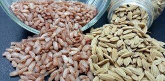 Rata-rata hasil varietas beras merah Inpari Arumba sekitar 6,12 ton gabah kering giling (GKG)/ha.
