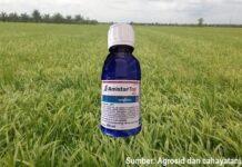 Fungisida andalan petani padi meningkatkan hasil panen.